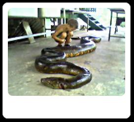 Vign_serpent